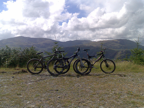 grizedale mountain biking