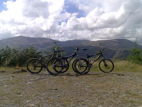 grizedale mountain biking